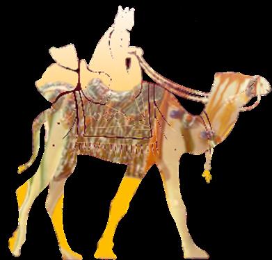 kamel_2-kopie